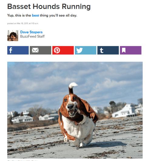 Basset hounds running buzzfeed